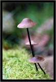 110913 - Mushroom