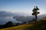 Otago Harbour from the High Road