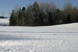 019  SNOWBALLS
