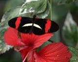 Exotic Butterfly Magic, Tucson Botanical Gardens