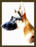 my_dog_zacky