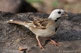 2011 Spring Bird Migration