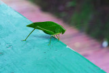 Green visitor