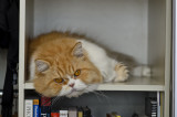 On his nesting shelf