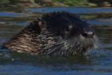Water mammal front right_MG_5452.jpg