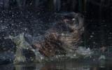Water mammal teeth_MG_5466.jpg