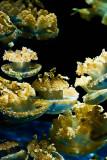 Attack of the alien jellyfish!_MG_9830.jpg