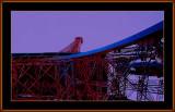 165=The-Eifel-Tower=IMG_7567.jpg
