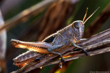 Grass Hoppers & katydids