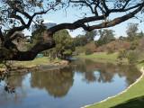 Parramatta River in the Park – 1