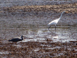 Water birds on a mud flat