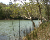 Upstream end of Middle Harbour - 2
