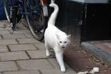 Cat Moves II