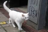Cat Moves III