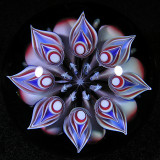 Fractal Bloom Size: 1.75 Price: SOLD