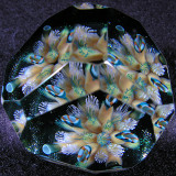 Fractured Reef Size: 1.26 x 1.57 Price: SOLD
