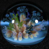 Polyp Party  Size: 1.30  Price: SOLD