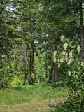 Hiking the Deep Forests of NE Washington