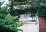 109_bush.JPG