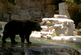 4883 grizzly silhouette.JPG