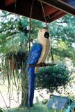 003A_parrot.JPG