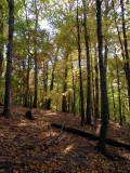 130151 woods 1.JPG
