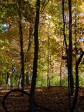 130162 woods 2.JPG