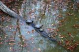 z08_turtles.JPG