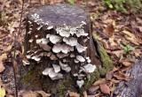 z10_fungi.JPG