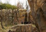 5956_chimps.JPG