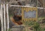 6000_orangutan.JPG