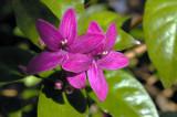 6247_flower.JPG