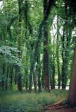 castlewood017A.JPG