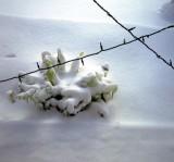 11_snow_morning.JPG