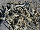 driftwood / firewood