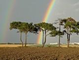 Preston Rainbow