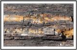 Petrified wood in Biosphere2