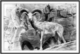 International Wildlife Museum 2
