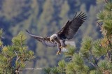Eagle Landing Northern ID
