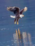 Eagle n Flight