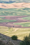 Steptoee_Butte View of Palouse Farm Country