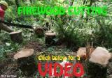 FIREWOOD CUTTING VIDEO
