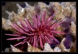 Urchin and Worms