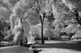 Boston Public Gardens - Infrared Perspective