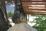 Squirrel 5.JPG