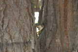 Squirrel 8.JPG