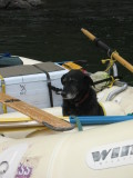 Whitewater Dog