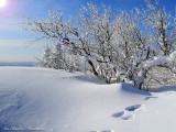 hiver du quebec