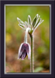 Halmi Flower
