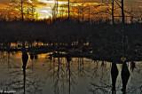 Marsh in Late Winter Evening